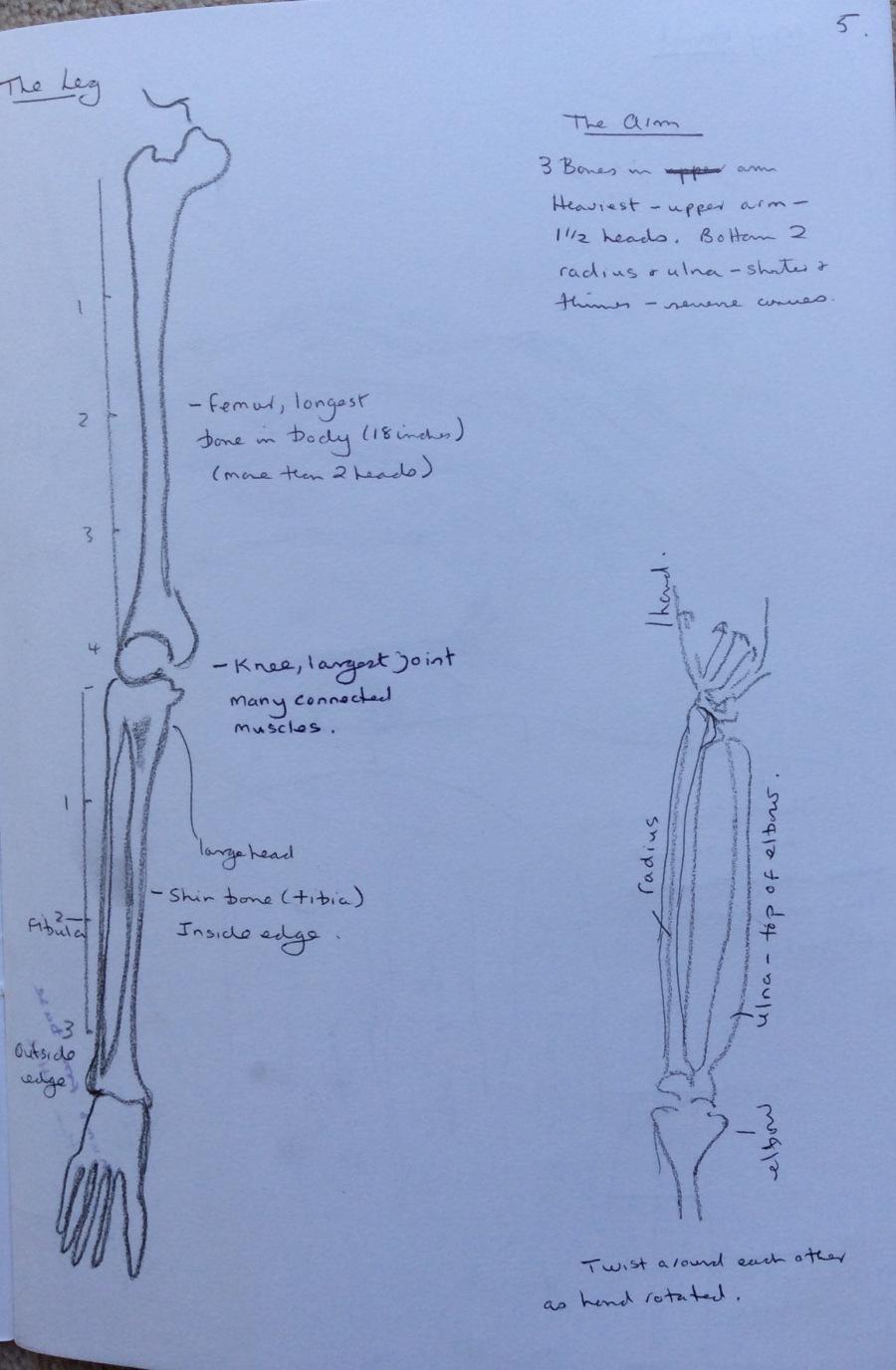 Leg and arm bones